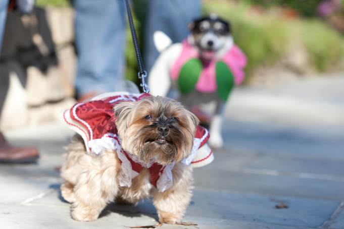 Spooky Pooch Howl-o-ween Celebration at Hillwood, Washington DC